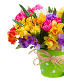Freesia and daffodil  flowers in green pot. Multicolored  freesia and daffodil  flowers  in green  pot  isolated on white background Royalty Free Stock Photo