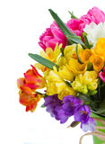 Freesia and daffodil  flowers. Multicolored  freesia and daffodil  flowers   isolated on white background Stock Photography