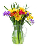 Freesia and daffodil  flowers in vase. Multicolored  freesia and daffodil  flowers in vase   isolated on white background Stock Images