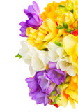 Freesia and daffodil  flowers. White, blue and yellow fresh freesia and daffodil  flowers  border  isolated on white background Royalty Free Stock Photography
