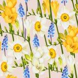 Freesia, daffodil and muscari seamless background Stock Image