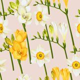 Freesia and daffodil vector seamless background Royalty Free Stock Photography