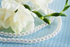 Freesia flower Stock Image