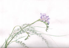 Freesia flower watercolor painting. The hand drawn watercolor of freesia flowers and grass Royalty Free Stock Photography