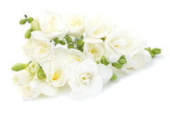 Freesia flowers. On white background - flowers and plants Stock Images