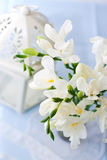 Freesia flowers Royalty Free Stock Image