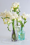 Freesia flowers Stock Photos