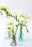 Freesia flowers Royalty Free Stock Photo