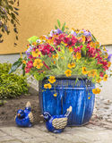 Freesia flowers in blue pot  in garden Royalty Free Stock Photo