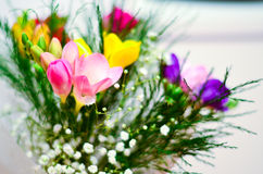 Freesia flowers. Bunch in a vase Stock Image