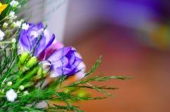 Freesia flowers Stock Photography