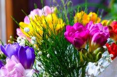 Freesia flowers Royalty Free Stock Image
