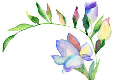 Freesia flowers, watercolor illustration. Blue Freesia flowers, watercolor illustration Stock Photography