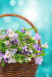 Freesia flowers in the wicker Stock Photos