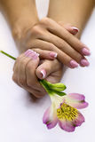Freesia in hands. Fresh freesia in women's hands Stock Images