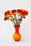 Freesia im Vase Stockbilder