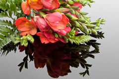 Freesia Reflection. Reflection of a bunch of red freesias & a fern leaf Royalty Free Stock Photography