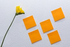 Freesia sur le fond blanc avec des notes de post-it Photographie stock