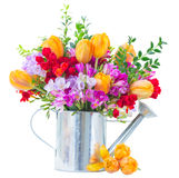 Freesia and tulip flowers. Blue, violet  and red freesia  and orange tulip flowers in metal watering can isolated on white background Stock Photo