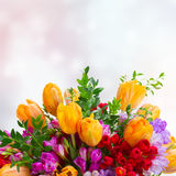 Freesia and tulip flowers. Violet  and red freesia  and orange tulip flowers close up ob bokeh  background Royalty Free Stock Image