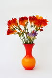 Freesia in vase Stock Images