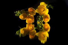 Freesia Stock Images