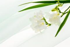 Freesias. White freesia on chiffon cloth Royalty Free Stock Photos