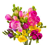 Freesias bouquet Royalty Free Stock Images