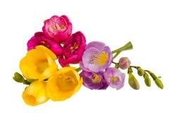 Freesias bouquet Royalty Free Stock Photos