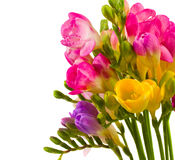 Freesias bouquet Stock Photo