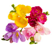 Freesias flowers Stock Photos