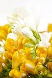 Freesias jaunes et blancs photographie stock