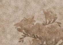 Freesias  scrapbooking  background Royalty Free Stock Photo