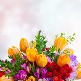 Freesie und Tulpenblumen lizenzfreies stockbild