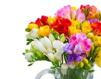 Freesieblumen auf Weiß lizenzfreie stockfotografie