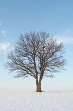 Freestanding tree Royalty Free Stock Photography