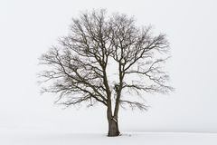 Freestanding tree Stock Images