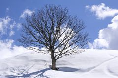 Freestanding tree on winter field. And blue sky stock photography