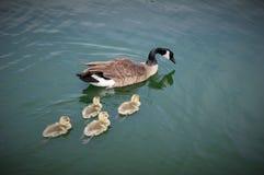 Freestone λίμνη πάρκων, Gilbert, Αριζόνα Στοκ φωτογραφία με δικαίωμα ελεύθερης χρήσης
