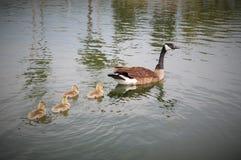 Freestone Park Pond, Gilbert, Arizona Royalty Free Stock Photography