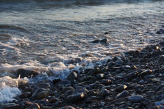 Freestream tranquil waves on pebble beach Royalty Free Stock Images