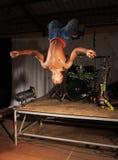 Freestyle hip-hop dancer Royalty Free Stock Photos