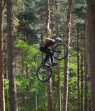 Freestyle  Stunt Cyclist in mid air very high with trees in background. Stock Image