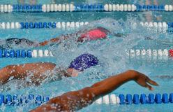 Freestyle swimmers in a close race at a swim meet. Freestyle swimmers compete in a competitive race during an outdoor summer swim meet Stock Photo
