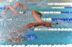 Freestyle swimmers in a close race at a swim meet. Freestyle swimmers compete in a close race during an outdoor summer swim meet Royalty Free Stock Photos