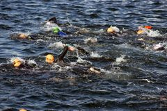 Freestyle swimmers in the sea Royalty Free Stock Photography