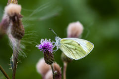 Freestyle. Yellow butterfly and wild flowers on the field Stock Image