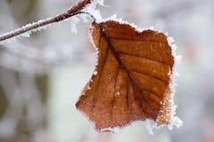 Freeze. A frozen leaf stock photography
