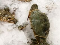 Freeze crab and Fish meat product on shelf in the store. Pile of fish on ice. Fresh seafood - fish on ice. Freeze crab and Fish meat product on shelf in the royalty free stock photo