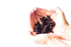 Freeze dried blueberries on a white background. Freeze dried blueberries on a white background in hands. Lyophilization. Food for astronauts Stock Images